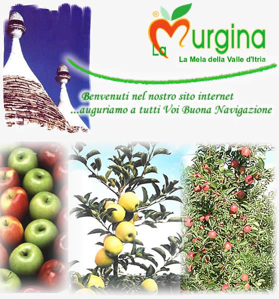 La Murgina - La mela della Valle d'Itria ..Benvenuti nel nostro sito internet...Auguriamo a tutti voi buona navigazione